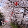 河原田桜まつり