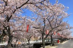 十四川桜まつり