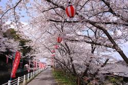 かわらだ桜まつり