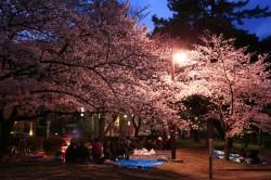 鵜の森桜まつり